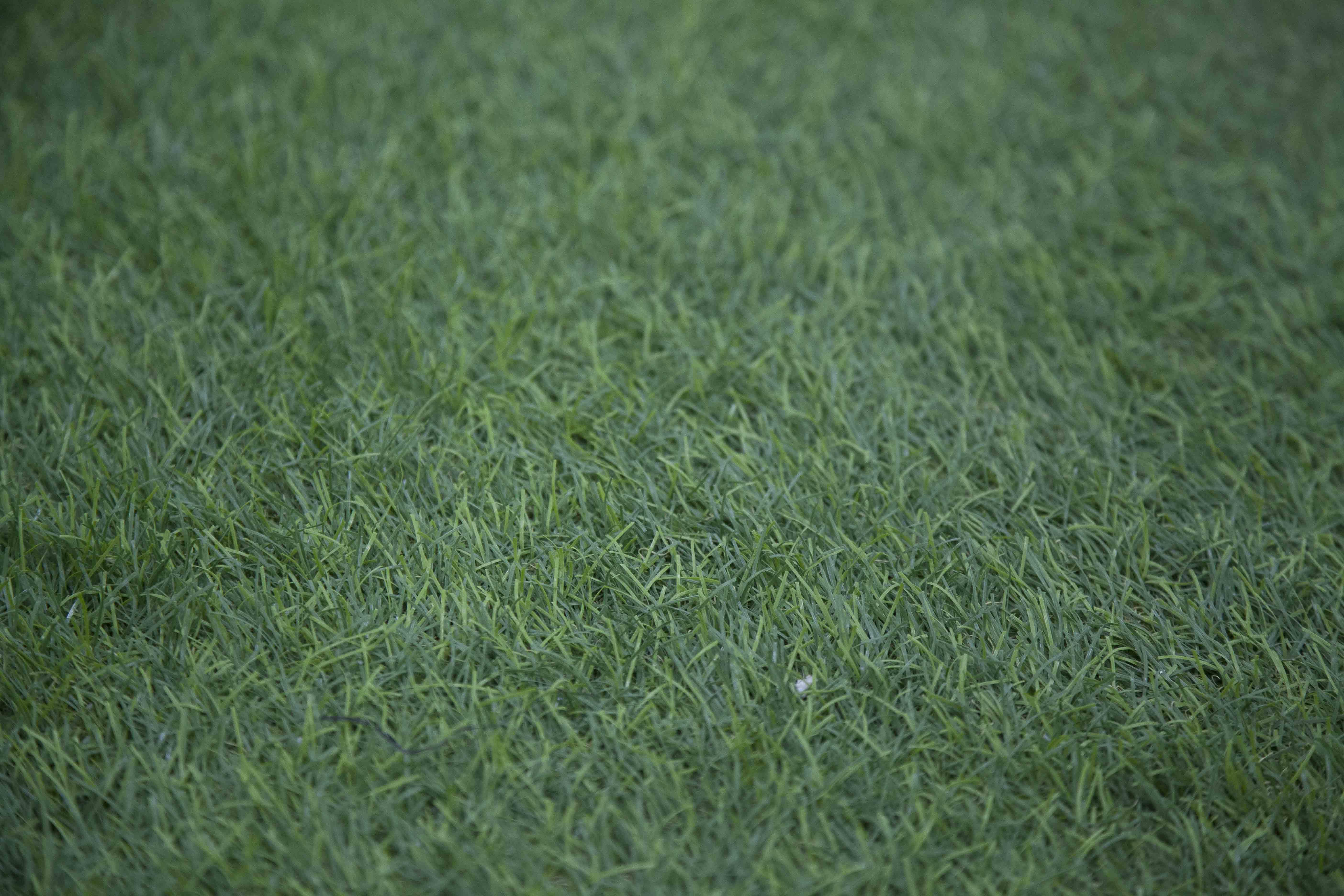 Ingrosso Tappeti San Giuseppe Vesuviano ingrosso tappeti moquette gallo distribuzioni cis nolagallo