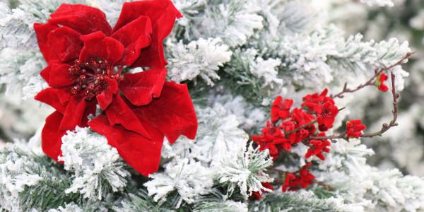 alberi di natale gadget natalizi ingrosso cis nola