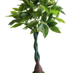 PIANTA FORTUNE TREE ART. 675/300  Misure: H150cm