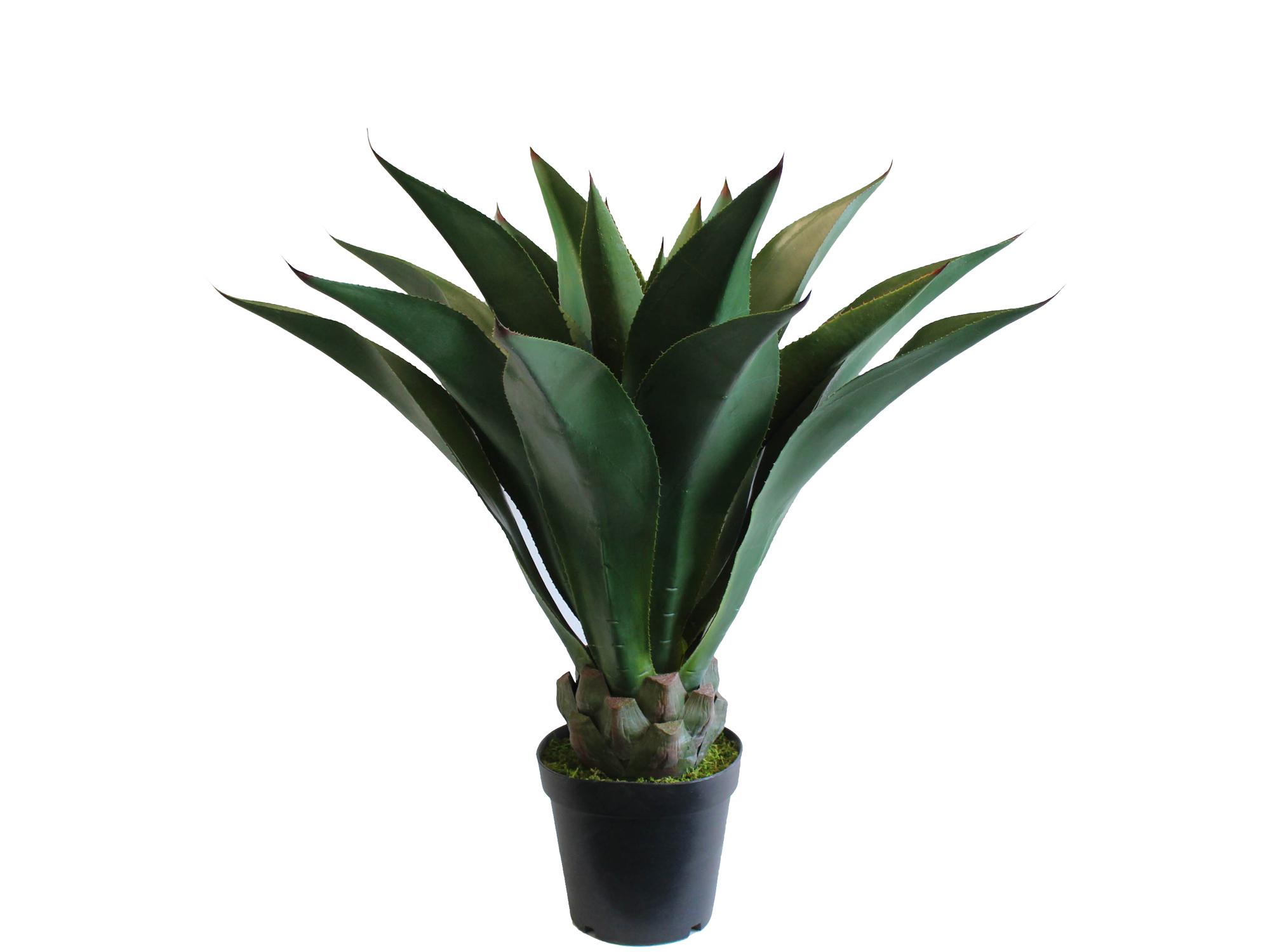 Pianta grassa verde art jf12010644 misure h 95cm gallo for Catalogo piante e fiori