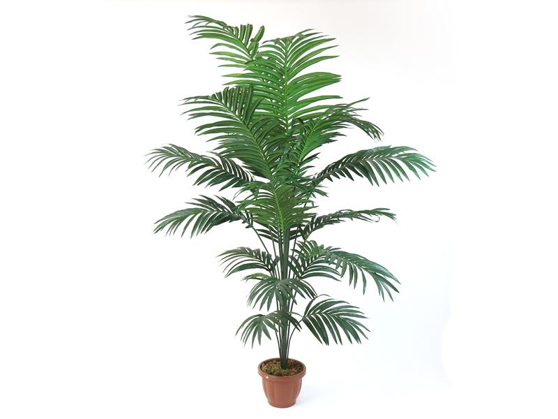 Pianta kentia misure piccola h135 media h160 grande for Kentia pianta